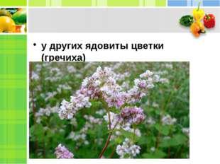 у других ядовиты цветки (гречиха)