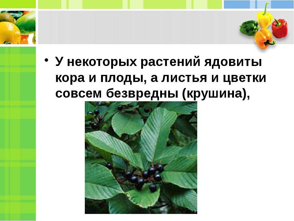 У некоторых растений ядовиты кора и плоды, а листья и цветки совсем безвредн...
