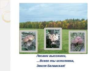 Лесами высокими, …Всего ты исполнена, Земля Белавская!