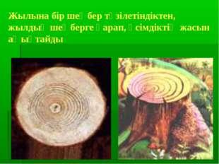 Жылына бір шеңбер түзілетіндіктен, жылдық шеңберге қарап, өсімдіктің жасын аң