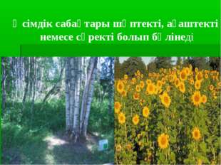 Өсімдік сабақтары шөптекті, ағаштекті немесе сүректі болып бөлінеді