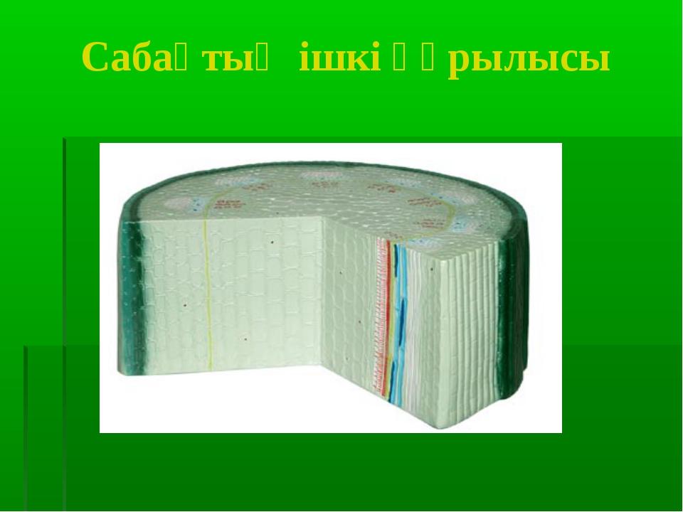 Сабақтың ішкі құрылысы