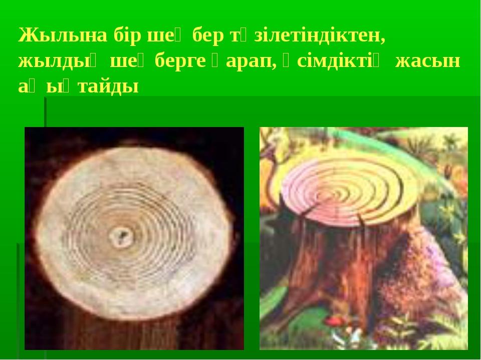 Жылына бір шеңбер түзілетіндіктен, жылдық шеңберге қарап, өсімдіктің жасын аң...