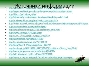 Источники информации http://russiafaq.ru/questions/Skolko_zubov_u_akuli.html