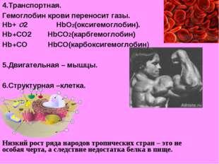 4.Транспортная. Гемоглобин крови переносит газы. Hb+ О2 HbО2(оксигемоглобин).