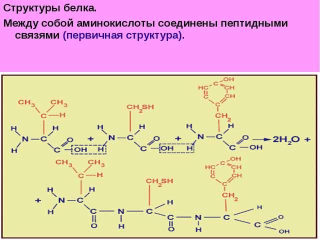 Структуры белка. Между собой аминокислоты соединены пептидными связями (перви...