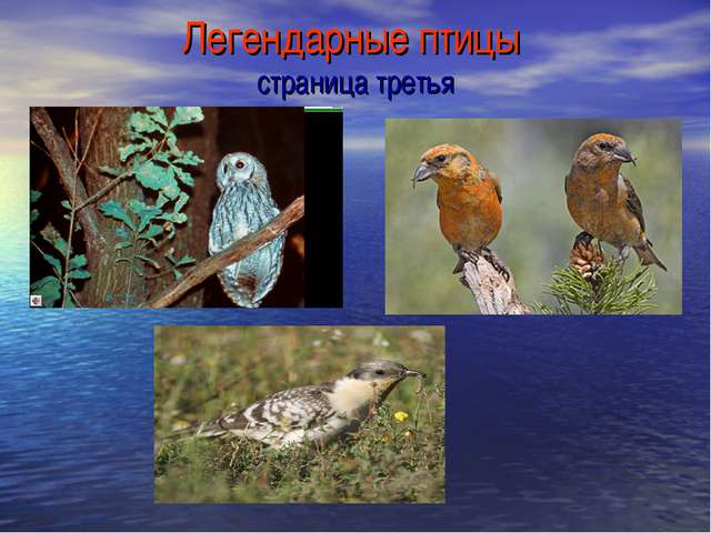 Легендарные птицы страница третья