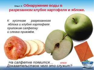 Опыт 2: Обнаружение воды в разрезанном клубне картофеля и яблоке. К кусочкам