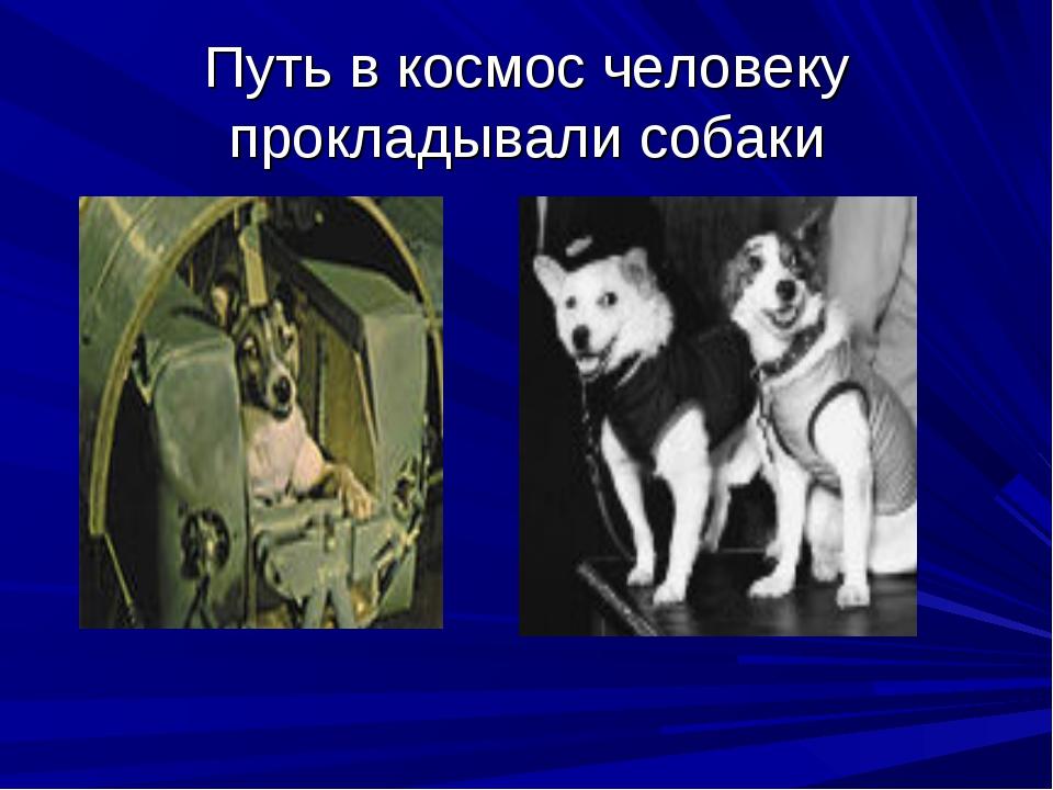 Путь в космос человеку прокладывали собаки