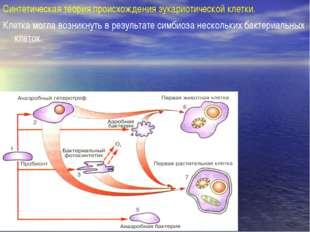 Синтетическая теория происхождения эукариотической клетки. Клетка могла возни