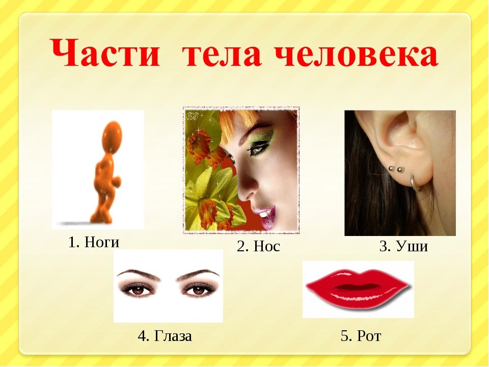 1. Ноги 2. Нос 3. Уши 4. Глаза 5. Рот
