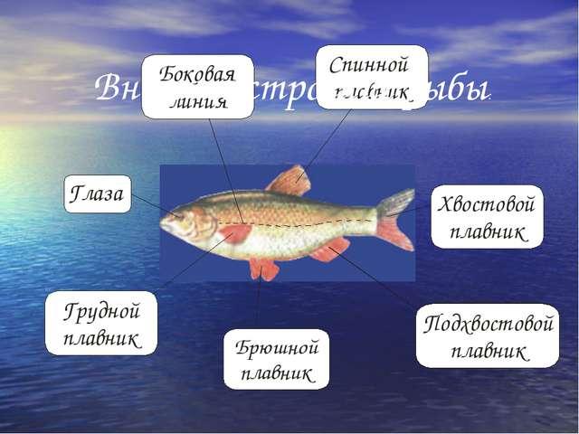 Внешнее строение рыбы: