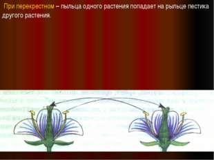 При перекрестном – пыльца одного растения попадает на рыльце пестика другого