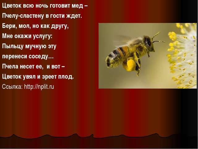 Цветок всю ночь готовит мед – Пчелу-сластену в гости ждет. Бери, мол, но как...