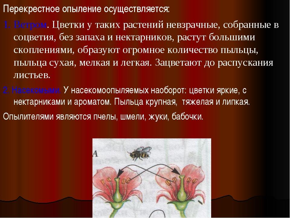 Перекрестное опыление осуществляется: 1. Ветром. Цветки у таких растений невз...