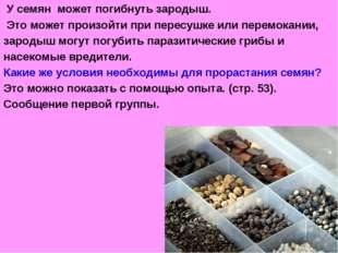 У семян может погибнуть зародыш. Это может произойти при пересушке или перем