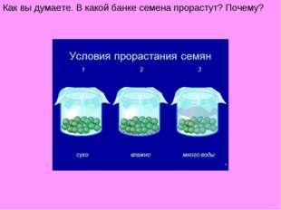 Как вы думаете. В какой банке семена прорастут? Почему?