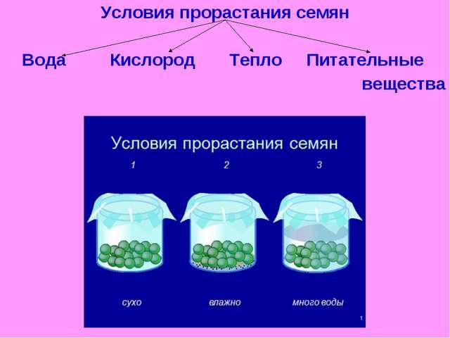 Условия прорастания семян Вода Кислород Тепло Питательные вещества
