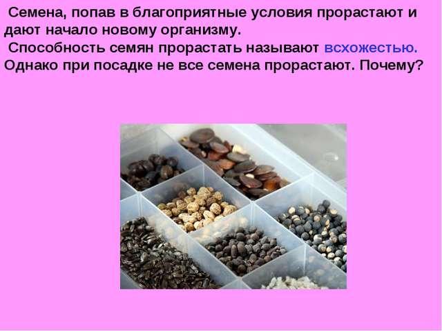 Семена, попав в благоприятные условия прорастают и дают начало новому органи...