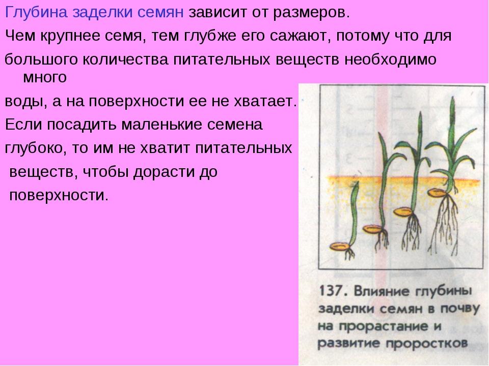 Глубина заделки семян зависит от размеров. Чем крупнее семя, тем глубже его с...