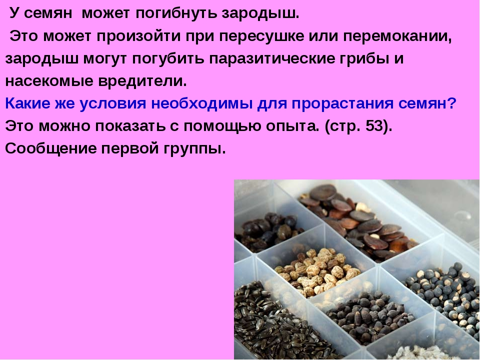 У семян может погибнуть зародыш. Это может произойти при пересушке или перем...