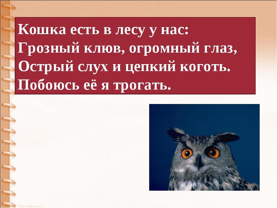 Кошка есть в лесу у нас: Грозный клюв, огромный глаз, Острый слух и цепкий ко...
