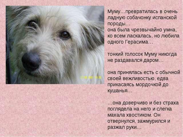 Муму…превратилась в очень ладную собачонку испанской породы… она была чрезвыч...