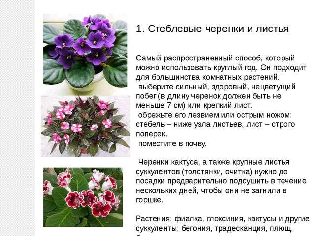 1. Стеблевые черенки и листья Самый распространенный способ, который можно ис...