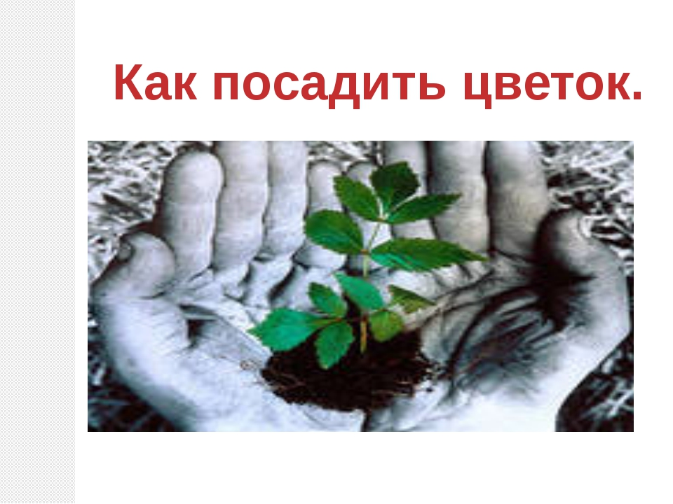 Как посадить цветок.