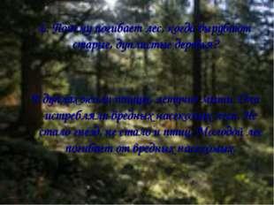 6. Почему погибает лес, когда вырубают старые, дуплистые деревья? В дуплах жи