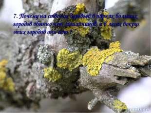 7. Почему на стволах деревьев в парках больших городов обычно нет лишайников,