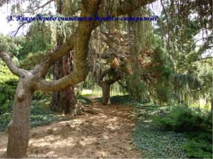 3. Какое дерево считается деревом-сюрпризом?