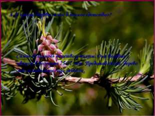 4. У какого дерева самое длинное «детство»? Самое «длинное» детство у пихты.