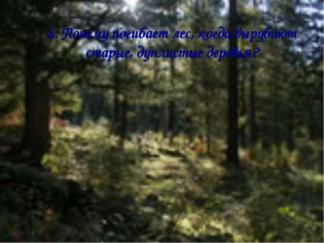 6. Почему погибает лес, когда вырубают старые, дуплистые деревья?