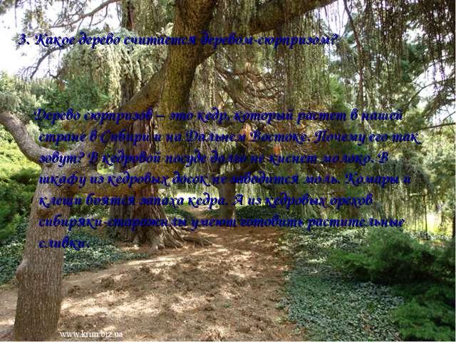 3. Какое дерево считается деревом-сюрпризом? Дерево сюрпризов – это кедр, кот...