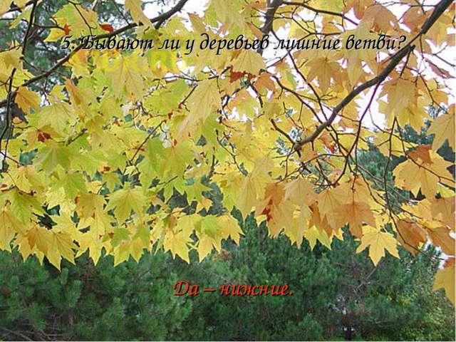 5. Бывают ли у деревьев лишние ветви? Да – нижние.