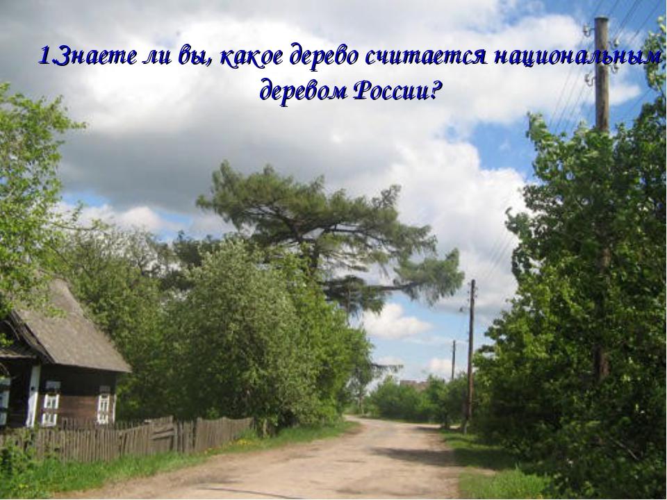 1.Знаете ли вы, какое дерево считается национальным деревом России?