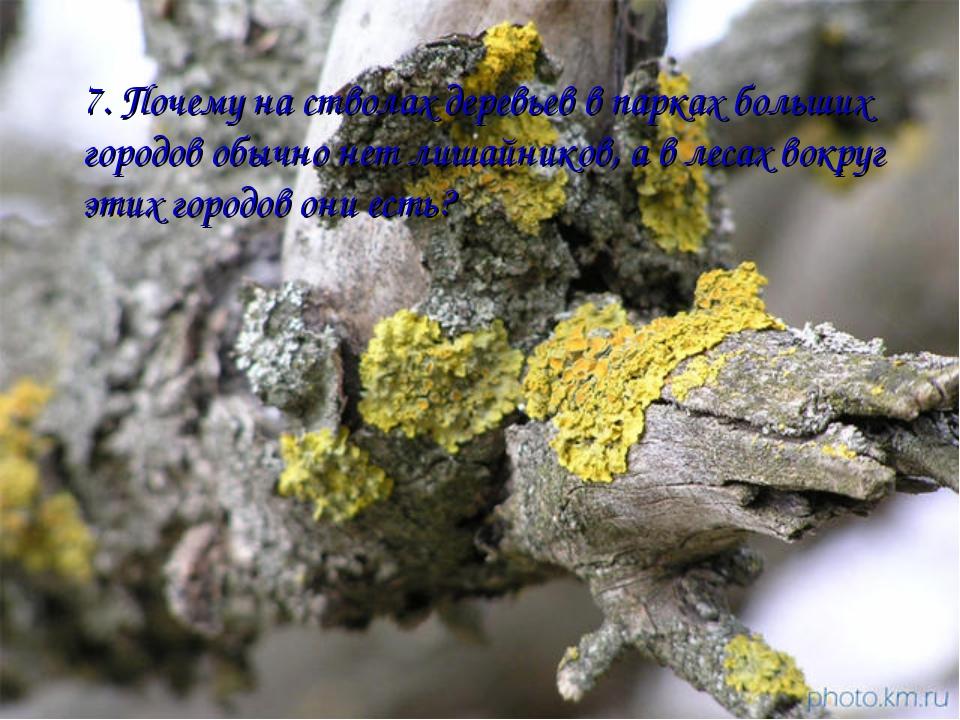 7. Почему на стволах деревьев в парках больших городов обычно нет лишайников,...
