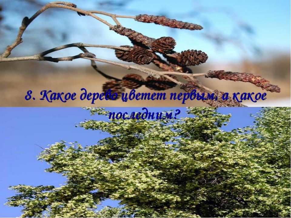 8. Какое дерево цветет первым, а какое последним?