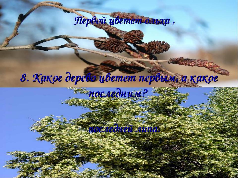 8. Какое дерево цветет первым, а какое последним? Первой цветет ольха , после...