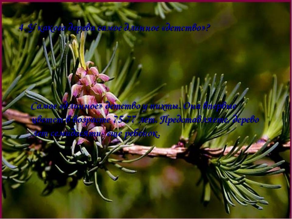 4. У какого дерева самое длинное «детство»? Самое «длинное» детство у пихты....