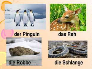 der Pinguin das Reh die Robbe die Schlange