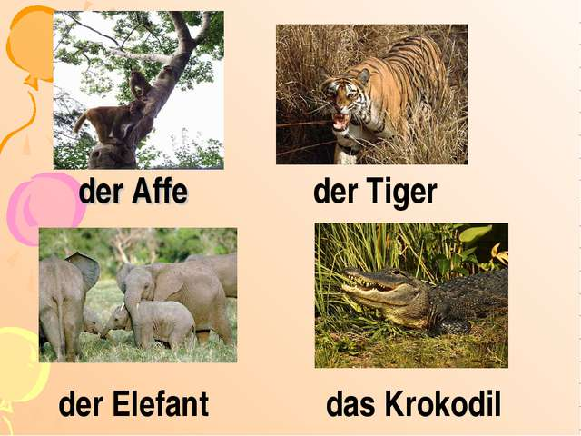 der Affe der Elefant das Krokodil der Tiger