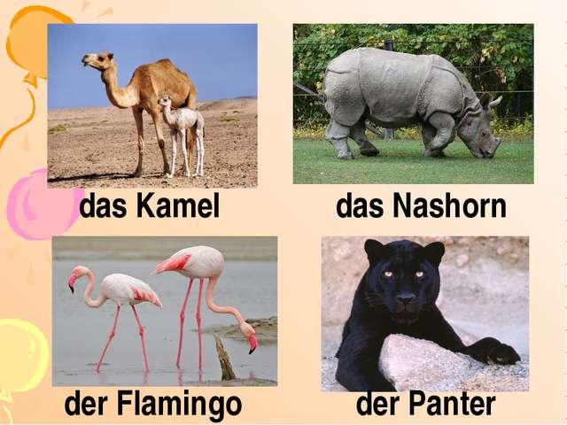 das Kamel das Nashorn der Flamingo der Panter