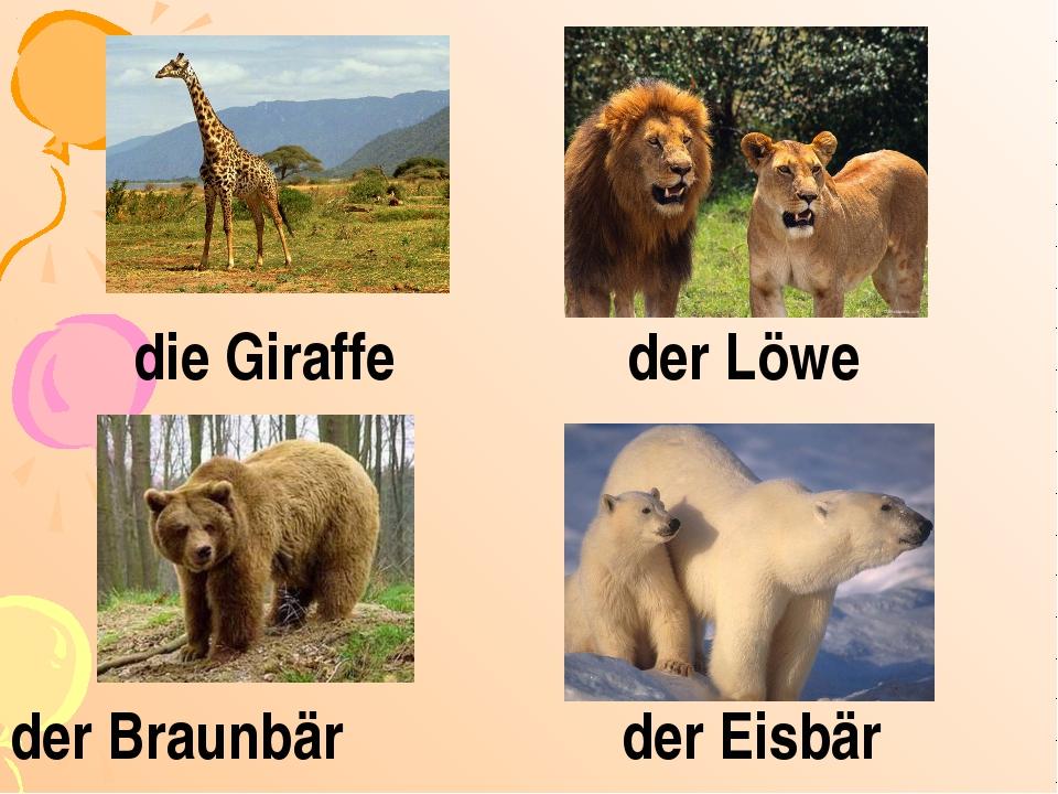die Giraffe der Löwe der Braunbär der Eisbär