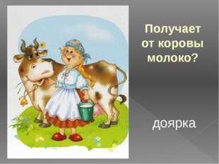 Получает от коровы молоко? доярка
