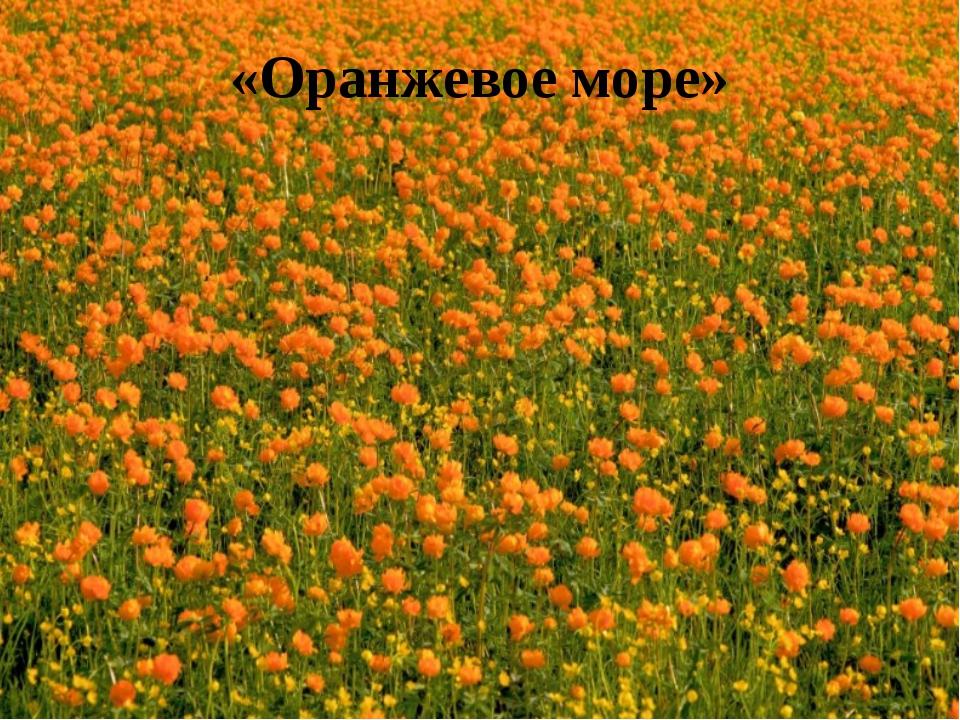 «Оранжевое море»