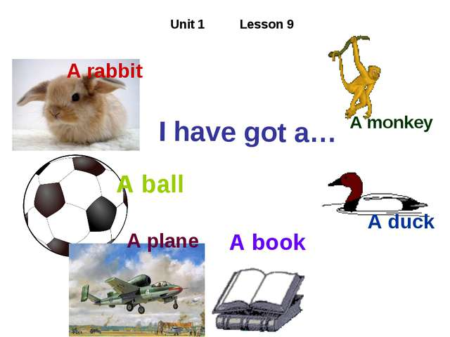 Unit 1 Lesson 9 I have got a… A rabbit A ball A plane A book A duck A monkey