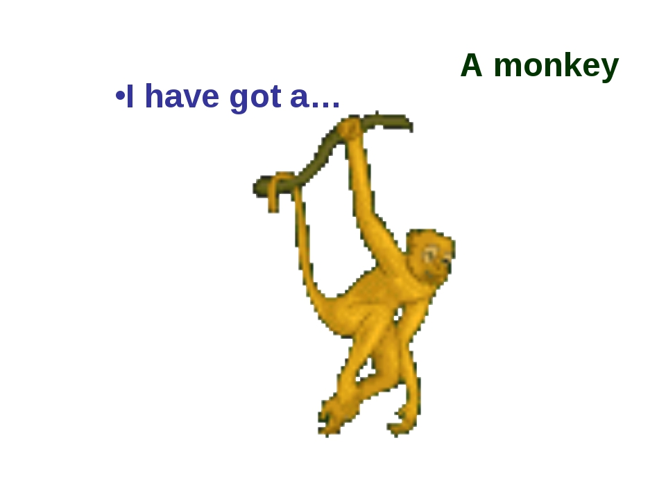 A monkey I have got a…