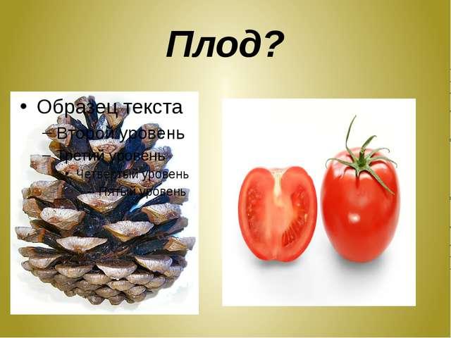 Плод?